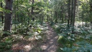 5_Trail