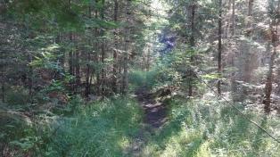 8_Trail