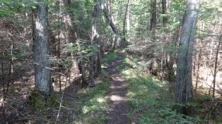 9_Trail