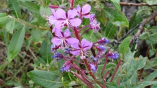 _Flower
